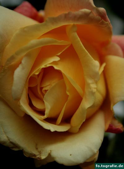 rosen-2